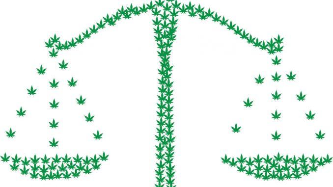 מאזני חוק ומשפט המורכבים מאוסף של עלי קנאביס ירוקים