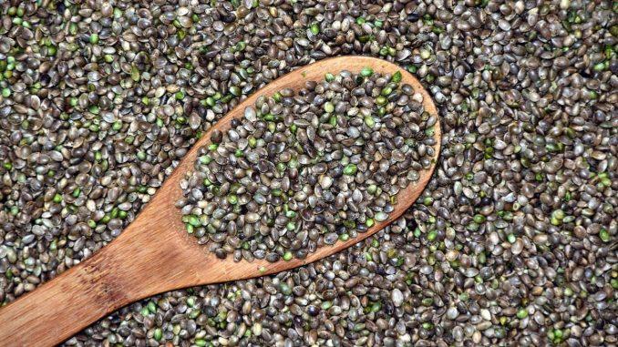 זרעי המפ